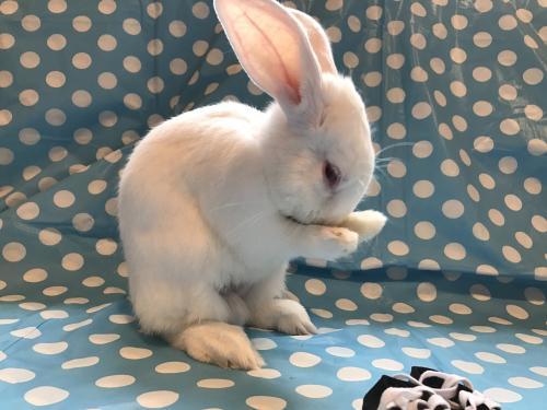 Rabbit Rescue Cleveland Ohio