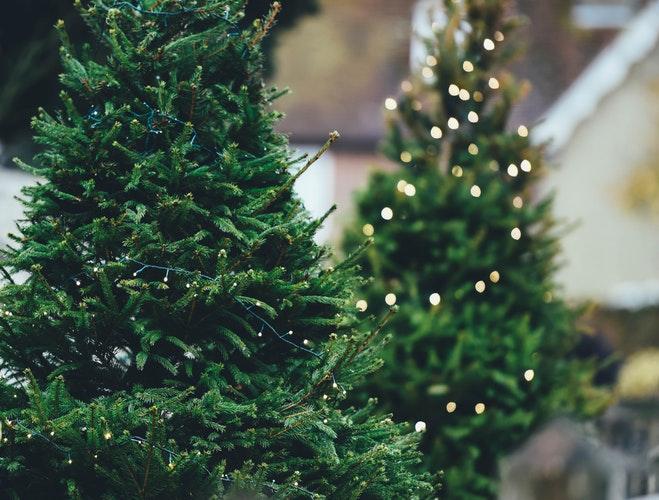 Photo of Tree Lights